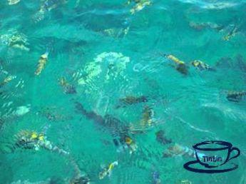 Snorkeling at Anilao, Batangas