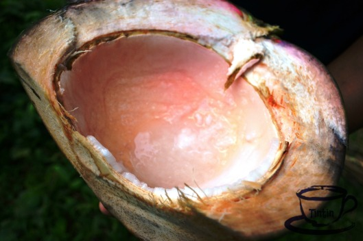 "This is the core of the fruit when freshly picked. People in Cagbalete Island call it ""marosa-rosa"" because of its pinkish color. They say, this is the best coconut that can cure UTI."