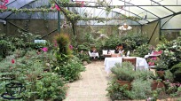 sonias-garden-at-mycupoftin-com1
