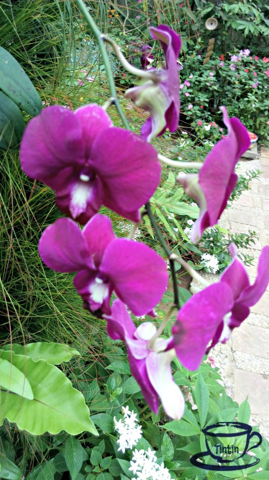 sonias-garden-at-mycupoftin-com2
