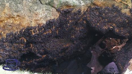 Monfort Bat Sanctuary